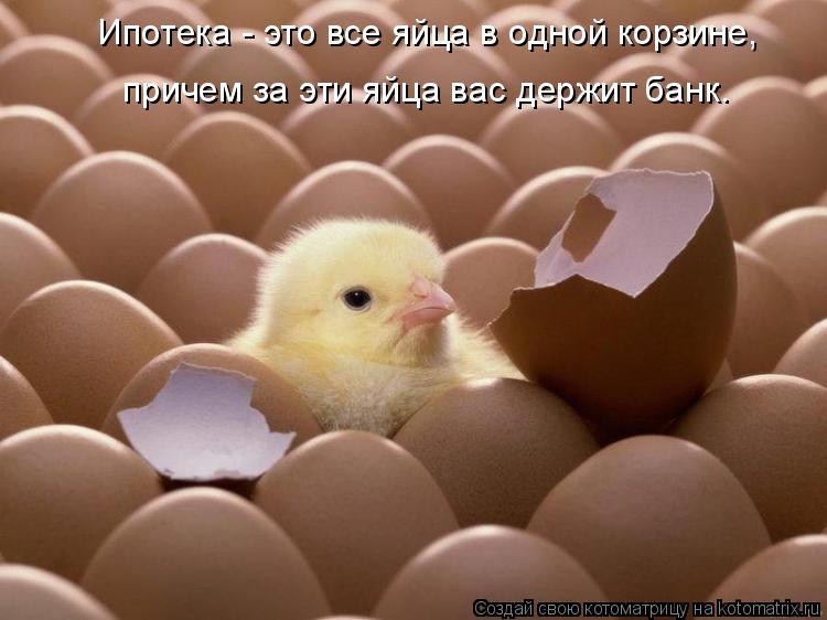 Котоматрица: Ипотека - это все яйца в одной корзине,  причем за эти яйца вас держит банк.