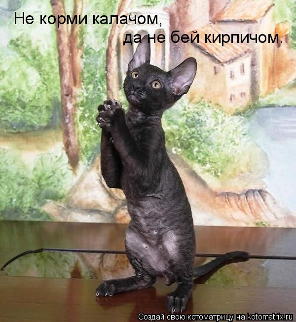 Котоматрица: Hе корми калачом,  да не бей кирпичом.