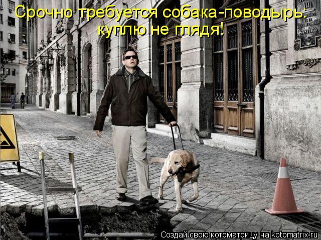 Котоматрица: Срочно требуется собака-поводырь:  куплю не глядя!