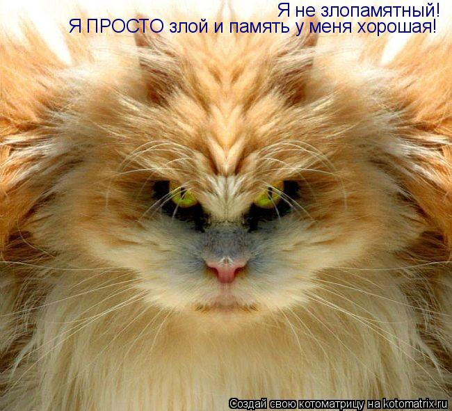 Котоматрица: Я не злопамятный! Я ПРОСТО злой и память у меня хорошая! Я ПРОСТО злой и память у меня хорошая!