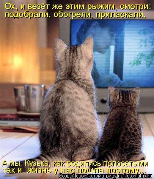 Котоматрица: подобрали, обогрели, приласкали. А мы, Кузька, как родились полосатыми так и  жизнь у нас пошла поэтому... Ох, и везёт же этим рыжим, смотри: