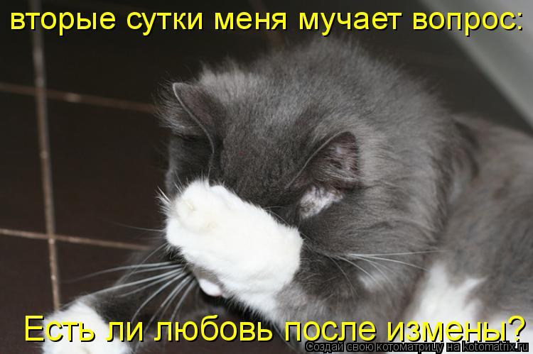 Котоматрица: вторые сутки меня мучает вопрос: Есть ли любовь после измены?  Есть ли любовь после измены?