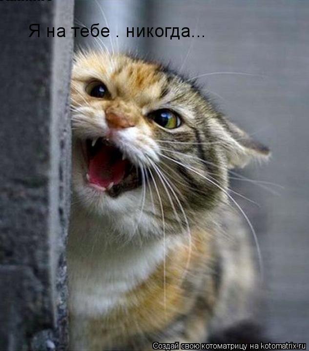Котоматрица: Я на тебе — никогда...
