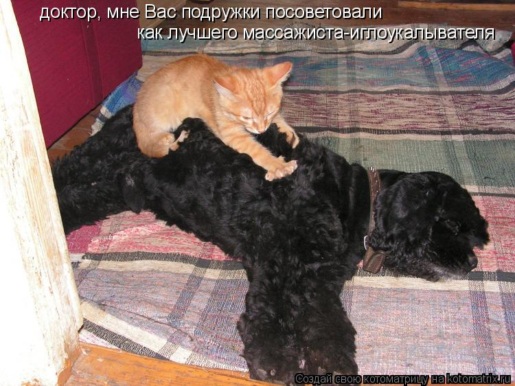 Котоматрица: доктор, мне Вас подружки посоветовали как лучшего массажиста-иглоукалывателя