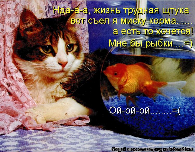 Котоматрица: Нда-а-а, жизнь трудная щтука вот съел я миску корма...... а есть то хочется! Мне бы рыбки....=) Ой-ой-ой........=(