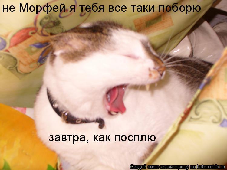 Котоматрица: не Морфей я тебя все таки поборю  завтра, как посплю