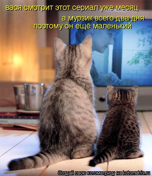 Котоматрица: вася смотрит этот сериал уже месяц а мурзик всего два дня поэтому он ещё маленький
