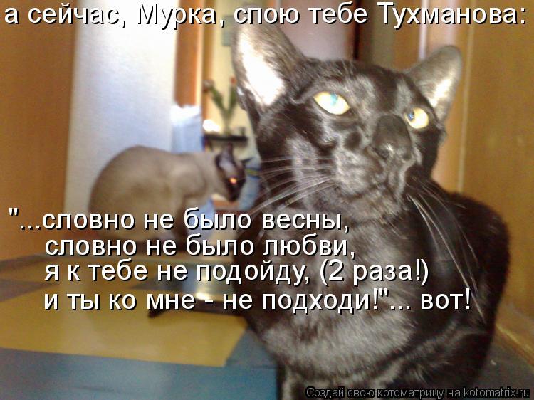 """Котоматрица: а сейчас, Мурка, спою тебе Тухманова: """"...словно не было весны, словно не было любви. я к тебе не подойду, (2 раза!) и ты ко мне - не подходи!""""... вот"""