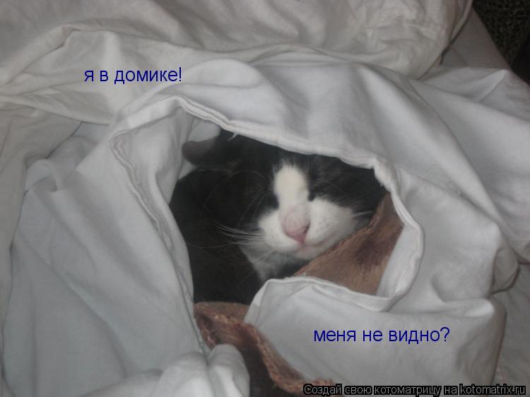 Котоматрица: я в домике! меня не видно?
