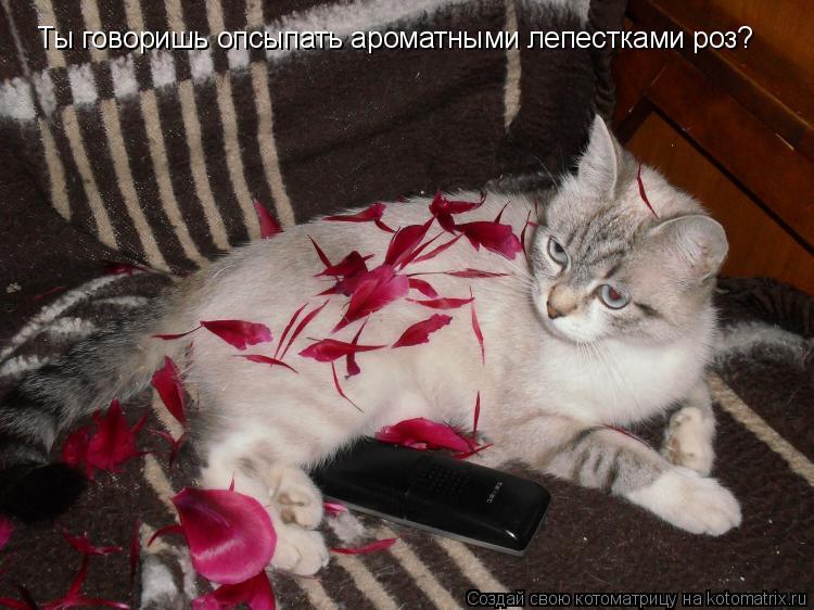 Котоматрица: Ты говоришь опсыпать ароматными лепестками роз?