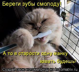 Котоматрица: Береги зубы смолоду! А то в старости одну манку хавать будешь!