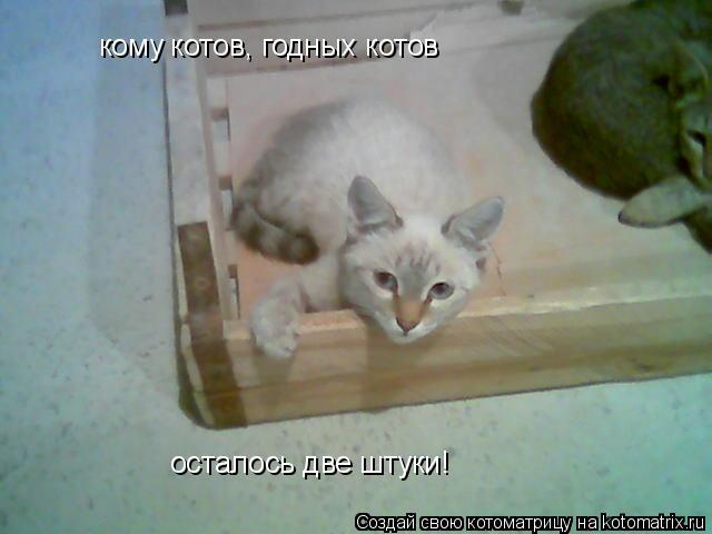 Котоматрица: кому котов, годных котов осталось две штуки!