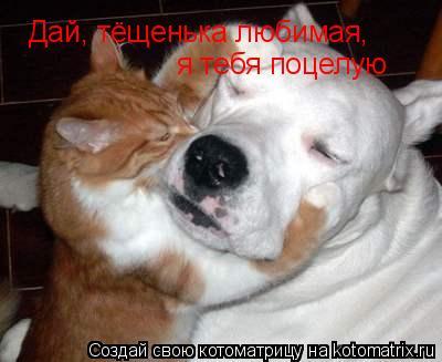 Котоматрица: Дай, тёщенька любимая,  я тебя поцелую