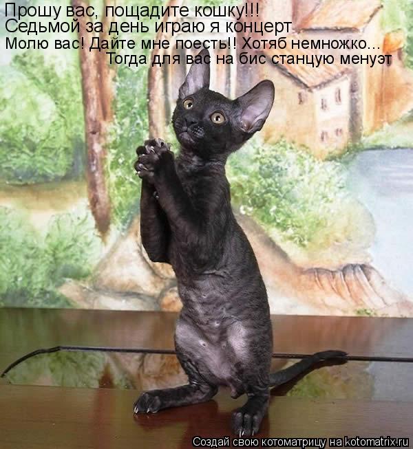 Котоматрица: Прошу вас, пощадите кошку!!! Седьмой за день играю я концерт Молю вас! Дайте мне поесть!! Хотяб немножко... Тогда для вас на бис станцую менуэт