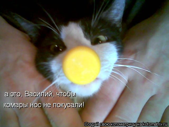 Котоматрица: а это, Василий, чтобы комары нос не покусали!