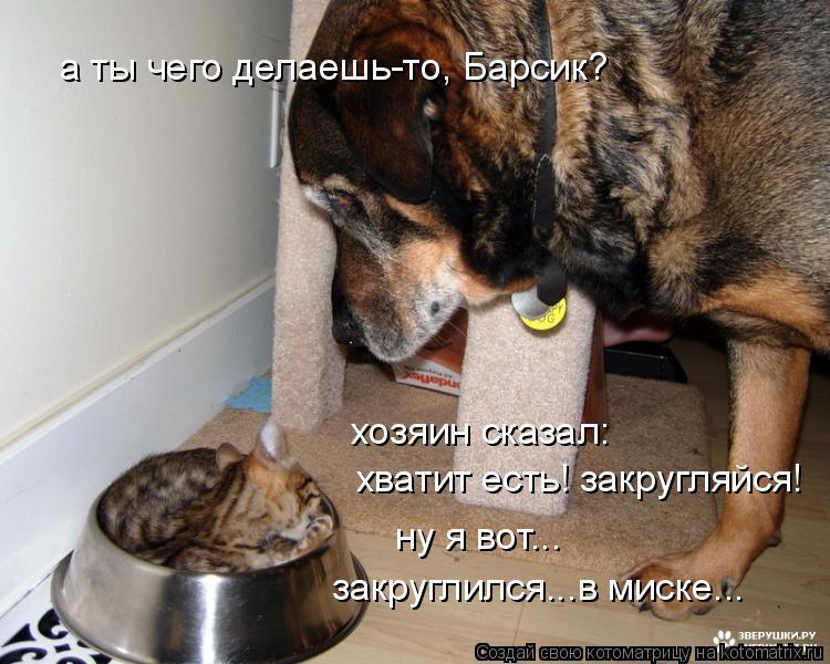 Котоматрица: а ты чего делаешь-то, Барсик? хозяин сказал:  хватит есть! закругляйся! ну я вот... закруглился...в миске...