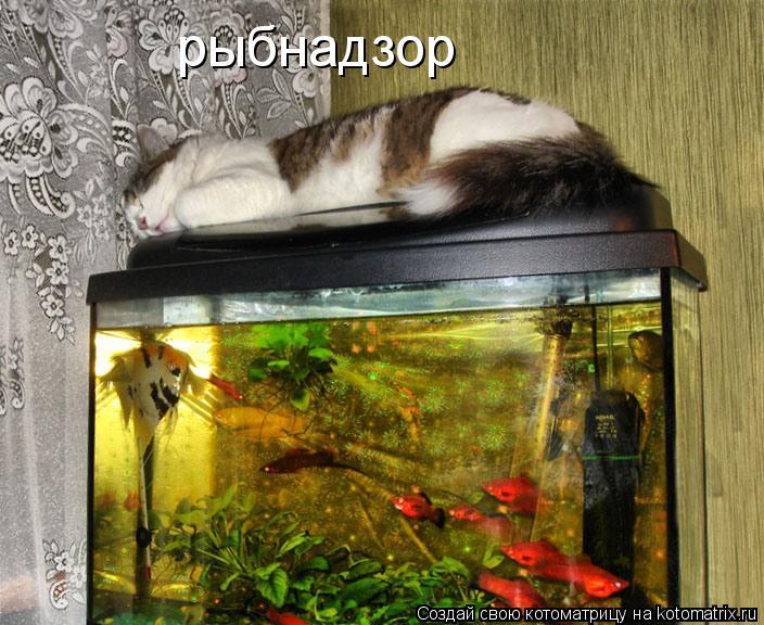 Котоматрица: рыбнадзор