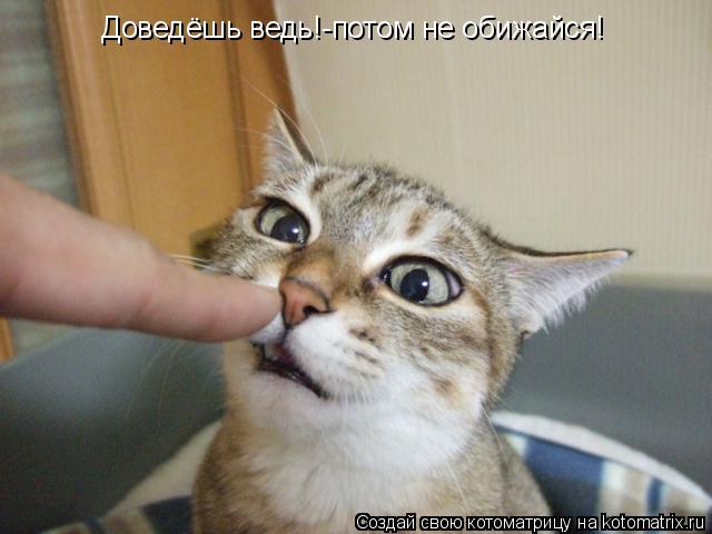 Котоматрица: Доведёшь ведь!-потом не обижайся!