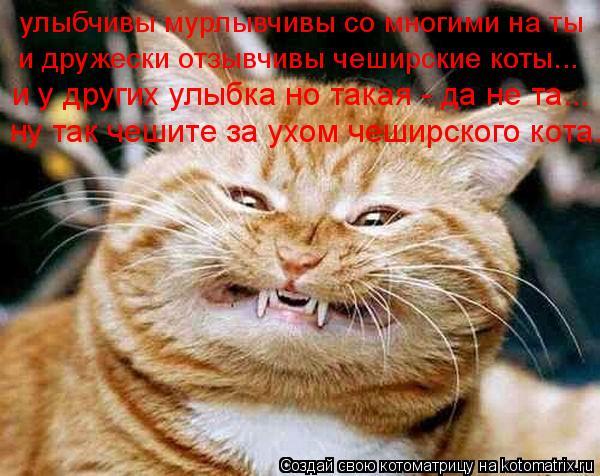 Котоматрица: и дружески отзывчивы чеширские коты... улыбчивы мурлывчивы со многими на ты и у других улыбка но такая - да не та... ну так чешите за ухом чешир