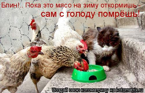 Котоматрица: Блин!.. Пока это мясо на зиму откормишь -  сам с голоду помрёшь!