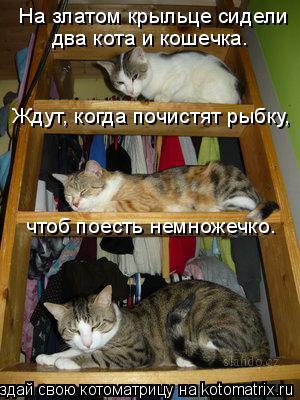 Котоматрица: На златом крыльце сидели два кота и кошечка. Ждут, когда почистят рыбку, чтоб поесть немножечко.