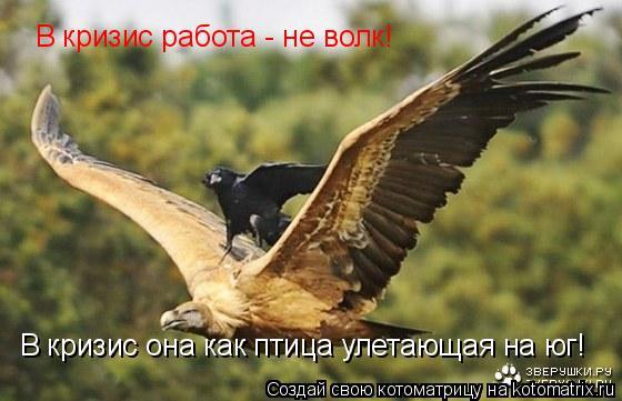Котоматрица: В кризис работа - не волк! В кризис она как птица улетающая на юг!