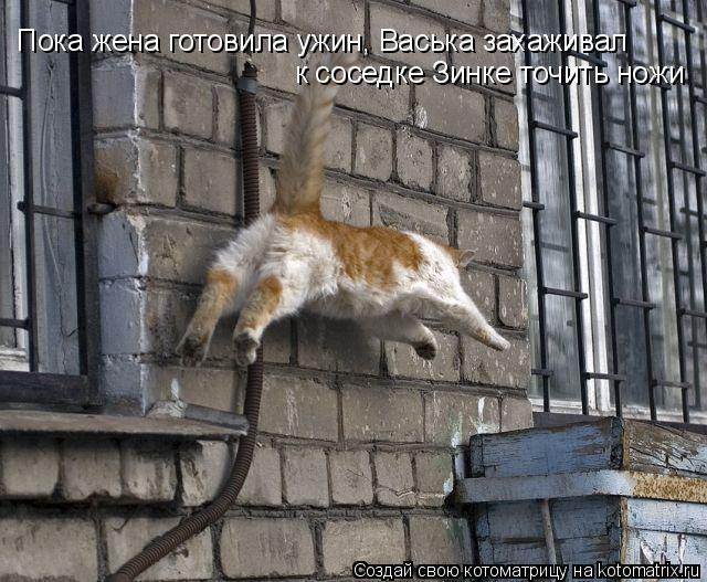 Котоматрица: Пока жена готовила ужин, Васька захаживал  к соседке Зинке точить ножи
