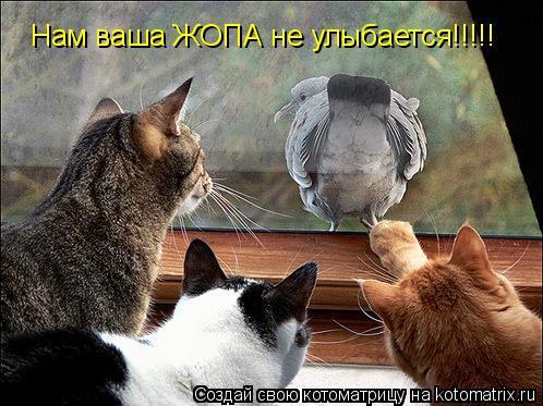 Котоматрица: Нам ваша ЖОПА не улыбается!!!!!