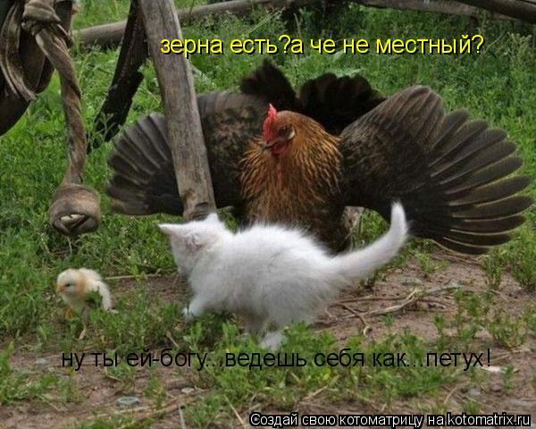 Котоматрица: зерна есть?а че не местный? ну ты ей-богу...ведешь себя как...петух!