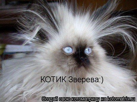 Котоматрица: КОТИК Зверева:)