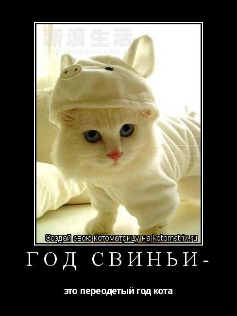 Котоматрица: Год свиньи- это переодетый год кота