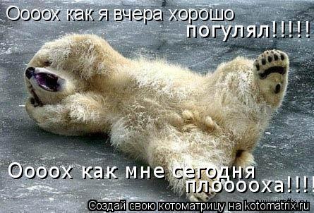 Котоматрица: Оооох как я вчера хорошо  Оооох как мне сегодня  плооооха!!!!! погулял!!!!!