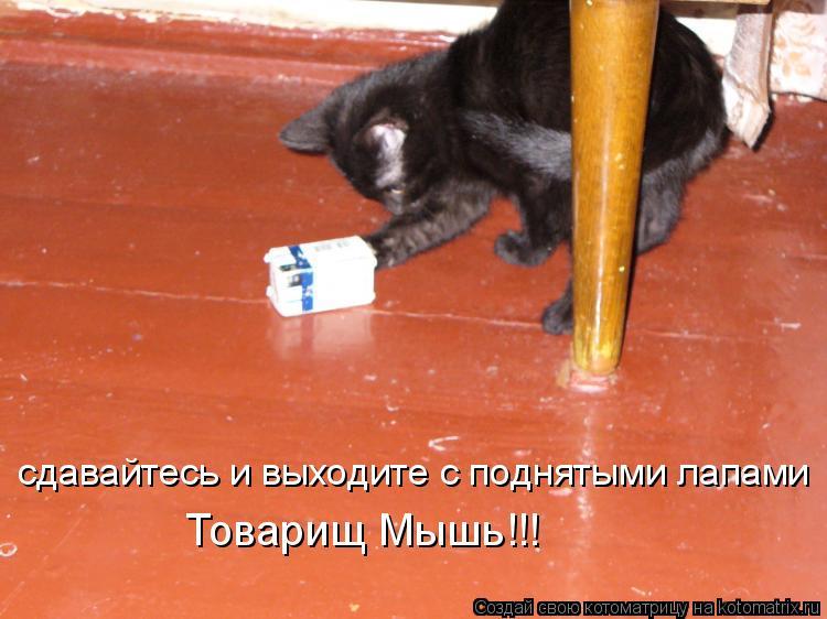 Котоматрица: сдавайтесь и выходите с поднятыми лапами Товарищ Мышь!!!