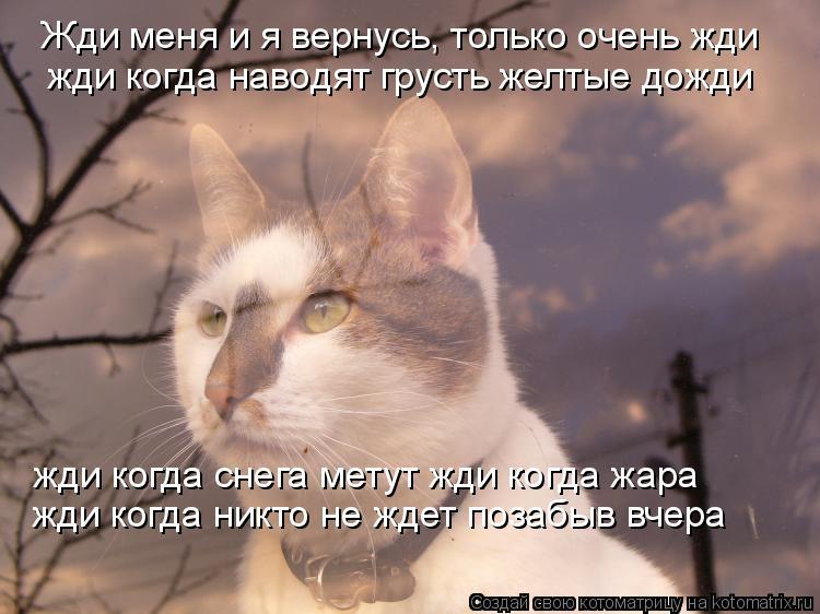 Котоматрица: Жди меня и я вернусь, только очень жди жди когда наводят грусть желтые дожди жди когда снега метут жди когда жара жди когда никто не ждет поз