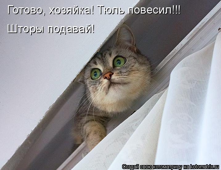 Котоматрица: Готово, хозяйка! Тюль повесил!!! Шторы подавай!