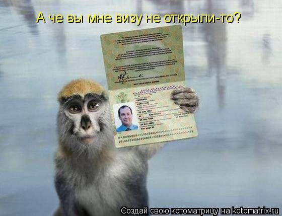 Котоматрица: А че вы мне визу не открыли-то?