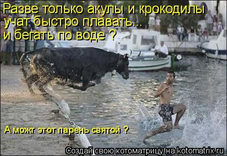 Котоматрица: Разве только акулы и крокодилы учат быстро плавать... и бегать по воде ? А можт этот парень святой ?