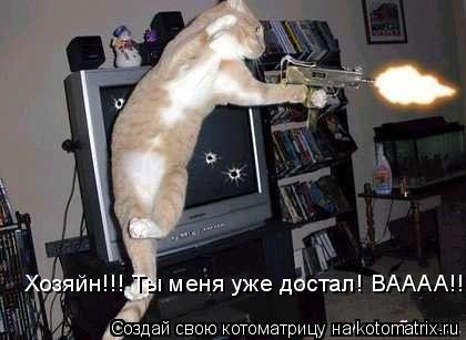 Котоматрица: Хозяйн!!! Ты меня уже достал! ВАААА!!!
