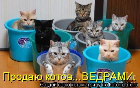Котоматрица: Продаю котов...ВЕДРАМИ.