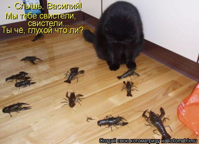 Котоматрица: -  Слышь, Василий!  Мы тебе свистели,  свистели... Ты чё, глухой что ли?
