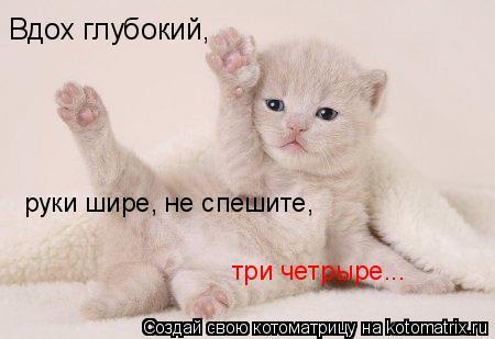 Котоматрица: Вдох глубокий, руки шире, не спешите, три четрыре...