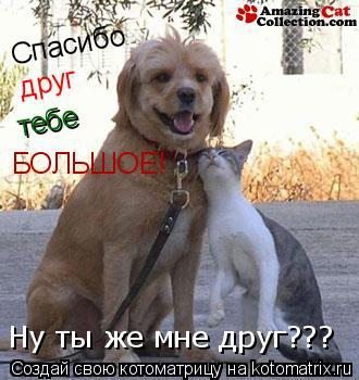 Котоматрица: Спасибо друг тебе БОЛЬШОЕ! Ну ты же мне друг???