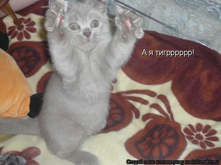 Котоматрица: А я тигрррррр!