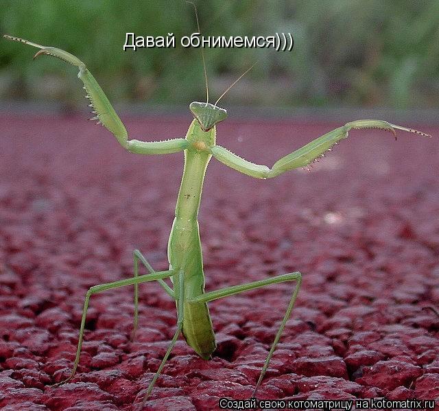 Котоматрица: Давай обнимемся)))