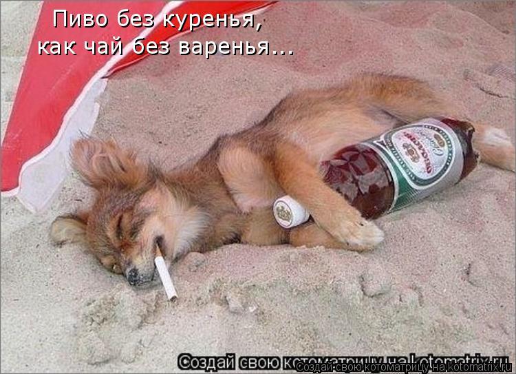 Котоматрица: Пиво без куренья, как чай без варенья...