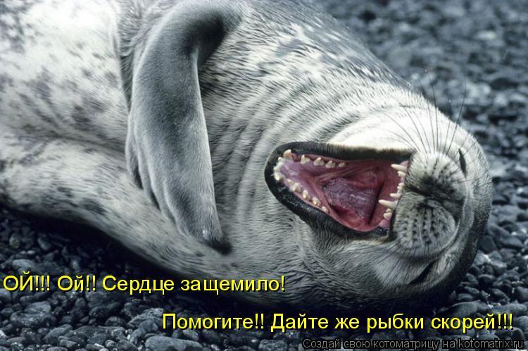 Котоматрица: ОЙ!!! Ой!! Сердце защемило! Помогите!! Дайте же рыбки скорей!!!