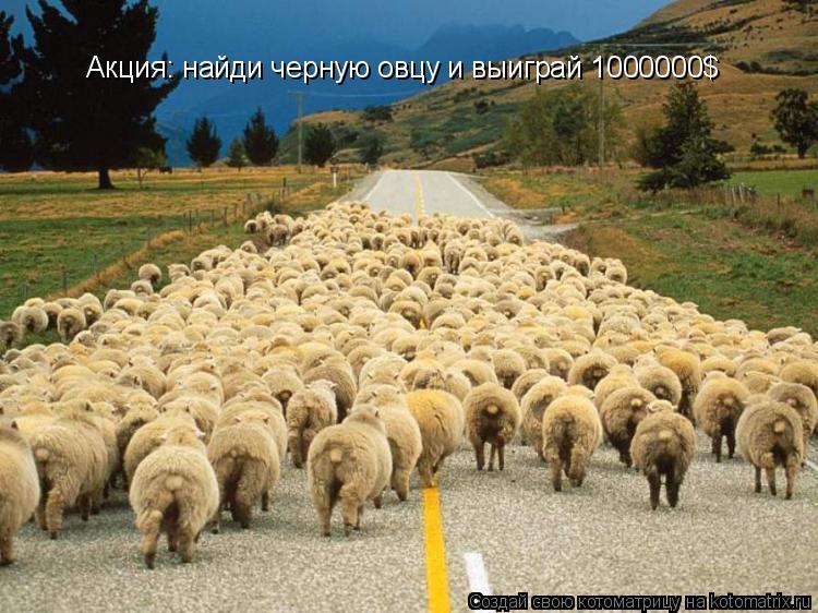 Котоматрица: Акция: найди черную овцу и выиграй 1000000$