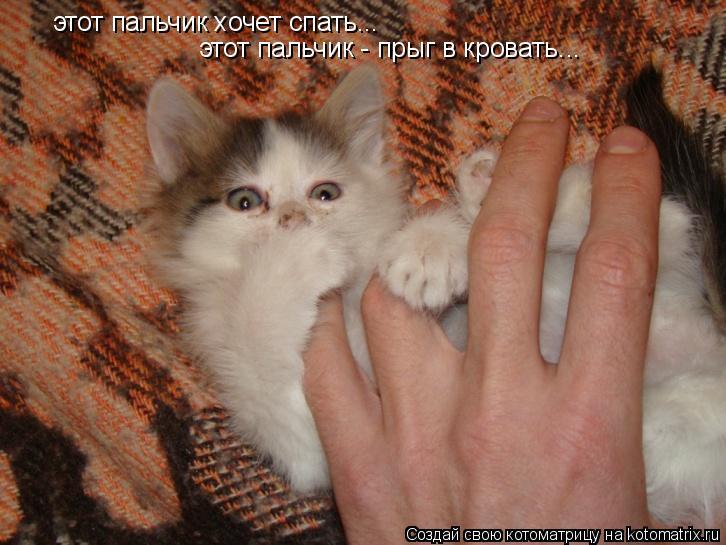 Котоматрица: этот пальчик хочет спать...  этот пальчик хочет спать...  этот пальчик - прыг в кровать...