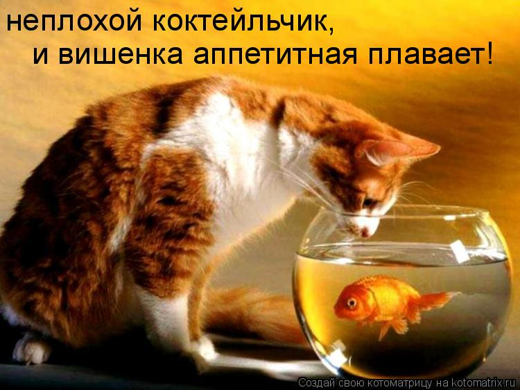 Котоматрица: неплохой коктейльчик, и вишенка аппетитная плавает!