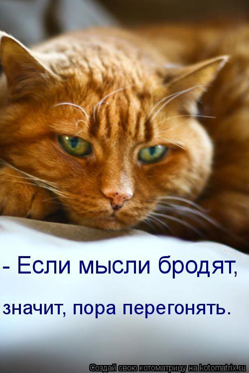 Котоматрица: - Если мысли бродят, значит, пора перегонять.